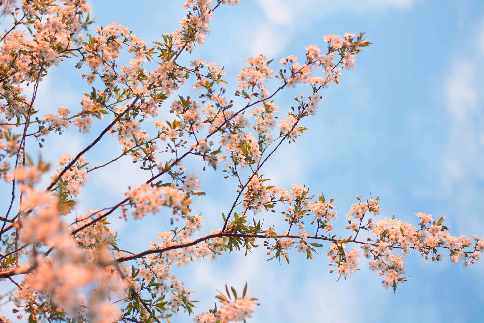 design-inredning-var-inspiration-blommor-pa-trad