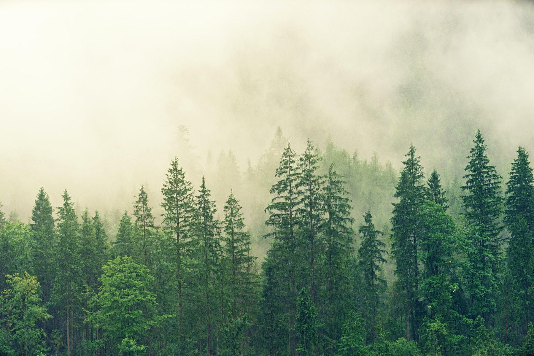 omslag för ekologisk artikel hos designinredning